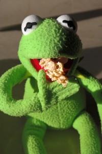 Rana comiendo cookies